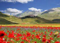 Flowering in Castelluccio di Norcia